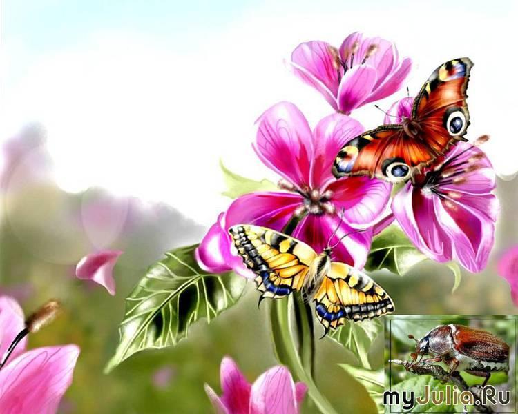 """Оригинал схемы вышивки  """"бабочки на цветах """" ."""