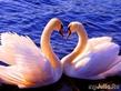 Это все была влюбленность, а сейчас пришла ЛЮБОВЬ…