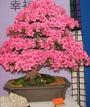 Экибана. zar_8011 zar_8013 Остриженное дерево возле ДК Железнодорожников...