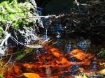 разноцветный ручей