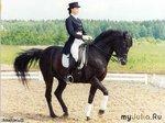 Кто занимался конным спортом, поделитесь впечатлениями!!!