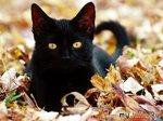 Кошки и другие животные