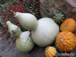 Осенние натюрморты природы