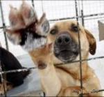 Собаке собачья жизнь