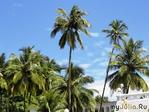Пряная экзотика или мое путешествие в индийский штат ГОА (часть вторая)