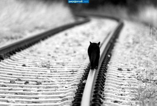 Черно-белый пейзаж