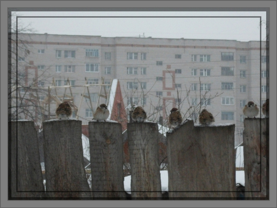 http://www.myjulia.ru/data/cache/2012/01/10/952928_3203-550x500.jpg