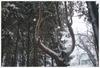 лесной трон
