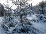 нарядная елочка на лыжне