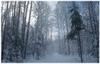 снегопад с деревьев