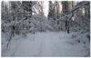 наша лыжня