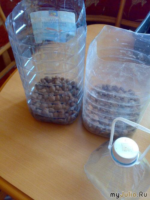 выращиваем огурцы в квартире