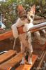 Котенок счастья