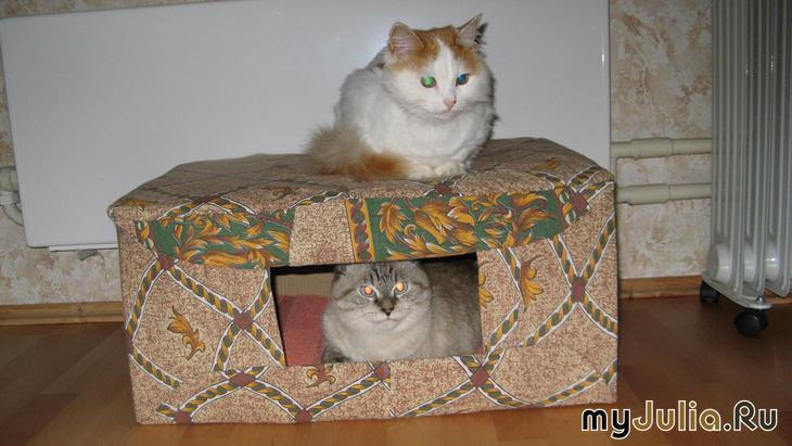 Спальное место для кота из коробки своими руками 24