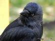 А птиц я раньше не любила