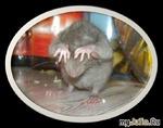 Тумбочки с мышами