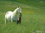 Красивая музыка, красивые животные...