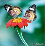 Свадебный декор: бабочки