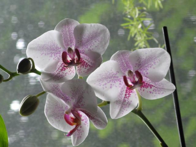 Август 2012-новое цветение