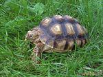 Как правильно кормить и содержать черепаху