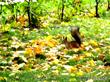 Осень золотая!