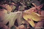 Осенний дневник
