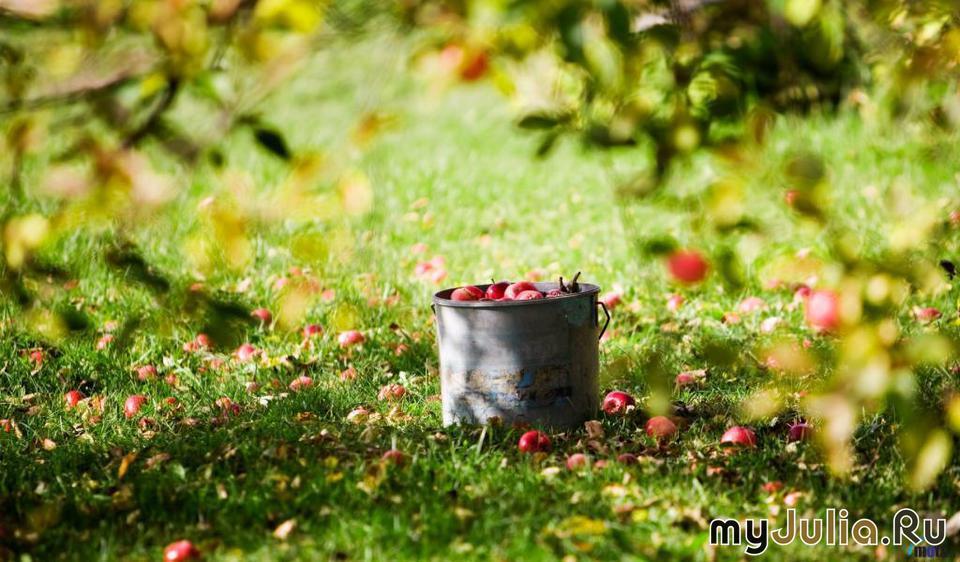 Секс в яблочном саду