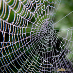 Мир паука