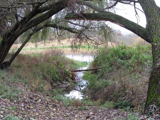 У речушки-у реки наклонились две вербы