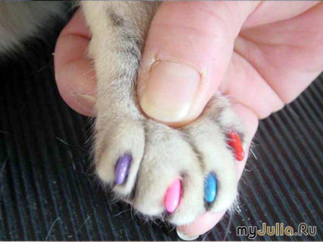 Как сделать кошке прическу