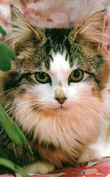 Из жизни кошачей