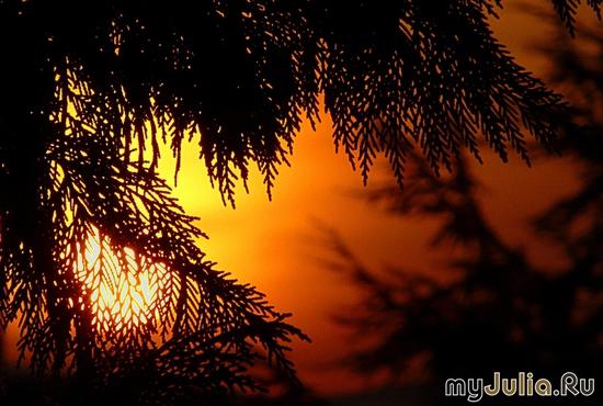Солнце в авоське