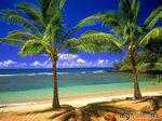 А вы хотите на Гавайи?