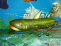 Акула (огурец). Игрушка для сына )))