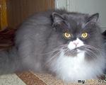 Записки кота Барона. Кошки-лекари.