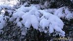 Сахалинский зимний лес