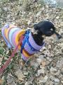 Кэрри в свитерочке.