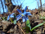 Песня о Весне