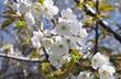 За что люблю весну?