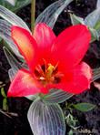 Миллион тюльпанов или Весенний рай в центре Украины