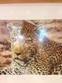 Животные, увиденные глазами Эллен