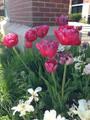 цветы у здания амбулатории