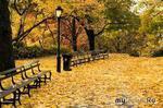 Женская осень