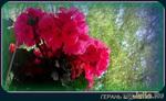 Картинки лета