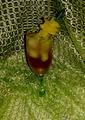 Ананасовый виски