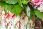 Цветы в... арбузе