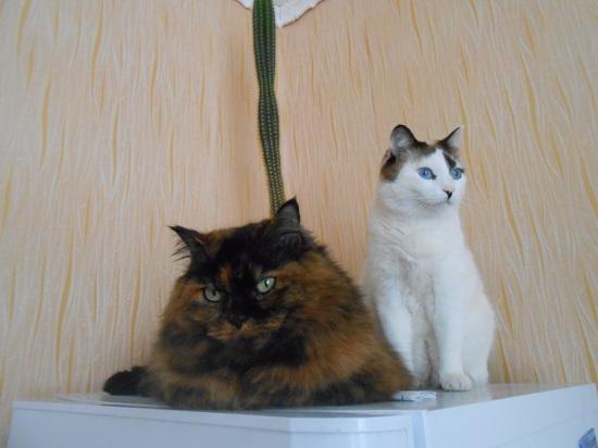 Софи и Жорик