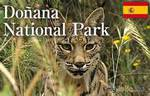 Национальные парки Испании. Доньяна