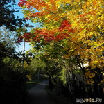 Шелест осенних листьев под башмаками