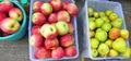 алматинские яблоки и груши